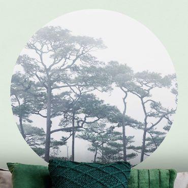 Runde Tapete selbstklebend - Baumkronen im Nebel