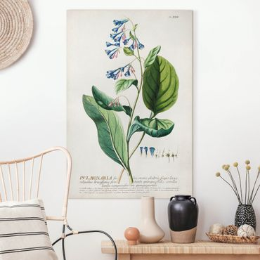 Leinwandbild - Vintage Botanik Illustration Lungenkraut - Hochformat 3:2