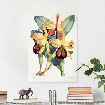 Glasbild - Maxim Gauci - Orchidee III - Hochformat 3:2