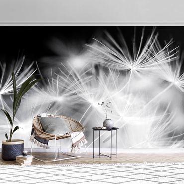 Metallic Tapete  - Bewegte Pusteblumen Nahaufnahme auf schwarzem Hintergrund