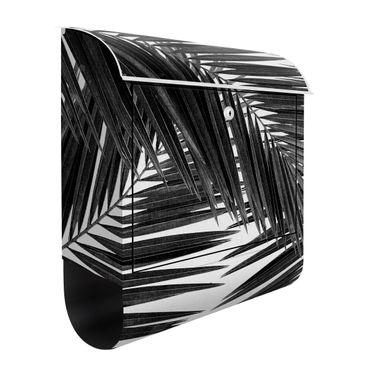 Briefkasten - Blick durch Palmenblätter schwarz weiß