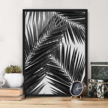 Bild mit Rahmen - Blick durch Palmenblätter schwarz weiß - Hochformat