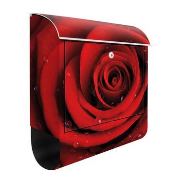 Briefkasten mit Zeitungsfach - Rote Rose mit Wassertropfen - Blumen Rot
