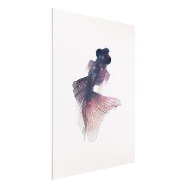 Forex Fine Art Print - Jonas Loose - Fisch mit Galaxie - Hochformat 4:3