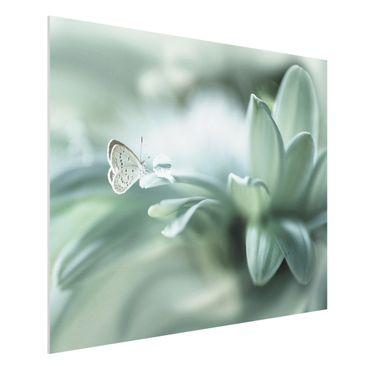Forex Fine Art Print - Schmetterling und Tautropfen in Pastellgrün - Querformat 3:4