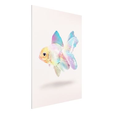 Forex Fine Art Print - Jonas Loose - Fisch in Pastell - Hochformat 4:3