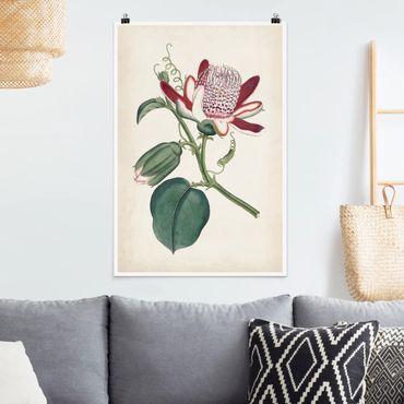 Poster - Gartenschönheit IV - Hochformat 3:2