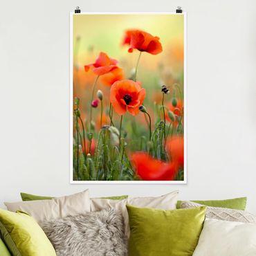 Poster - Roter Sommermohn - Hochformat 3:2