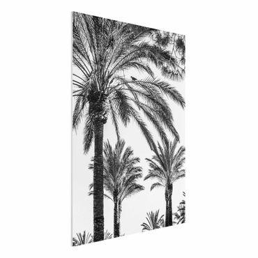 Forex Fine Art Print - Palmen im Sonnenuntergang Schwarz-Weiß - Hochformat 4:3
