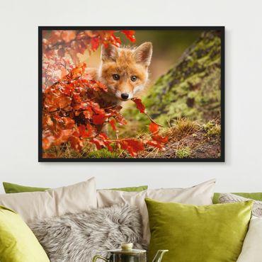 Bild mit Rahmen - Fuchs im Herbst - Querformat 3:4
