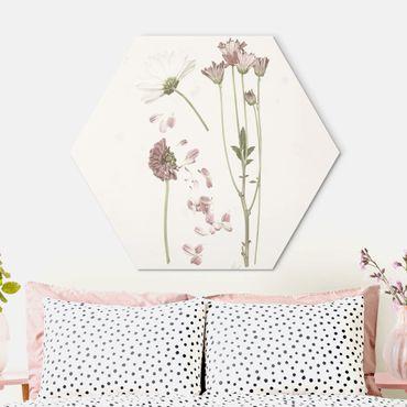 Hexagon Bild Alu-Dibond - Herbarium in rosa II