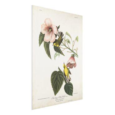 Forex Fine Art Print - Vintage Lehrtafel Grasmücke II - Hochformat 4:3
