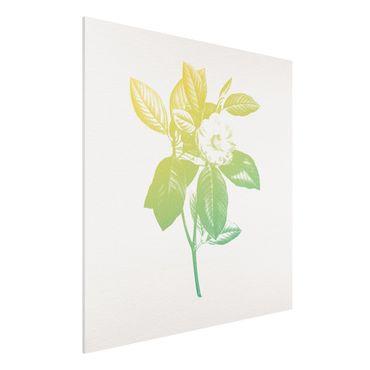 Forex Fine Art Print - Modern Vintage Botanik Kirschblüte Grün Gelb - Quadrat 1:1