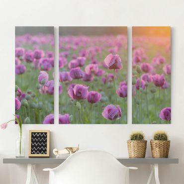 Leinwandbild 3-teilig - Violette Schlafmohn Blumenwiese im Frühling - Triptychon