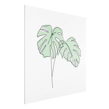 Forex Fine Art Print - Monstera Blätter Line Art - Quadrat 1:1