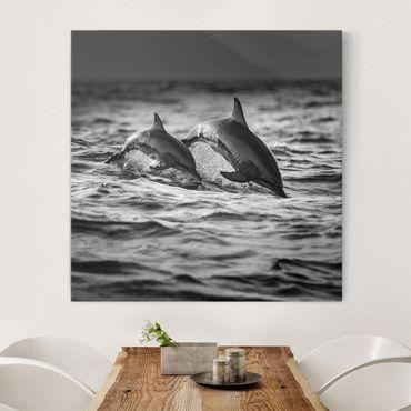 Leinwandbild - Zwei springende Delfine - Quadrat 1:1