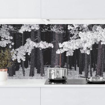 Küchenrückwand - Wald mit Raureif in Österreich
