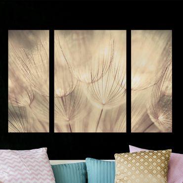 Leinwandbild 3-teilig - Pusteblumen Nahaufnahme in wohnlicher Sepia Tönung - Triptychon