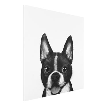 Forex Fine Art Print - Illustration Hund Boston Schwarz Weiß Malerei - Quadrat 1:1
