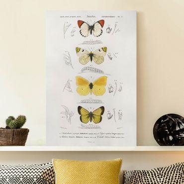 Leinwandbild - Vintage Lehrtafel Schmetterlinge II - Hochformat 3:2