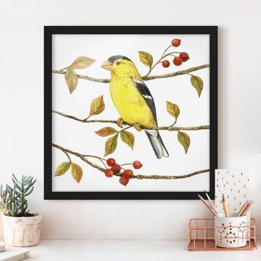 Bild mit Rahmen - Vögel und Beeren - Goldzeisig - Quadrat 1:1