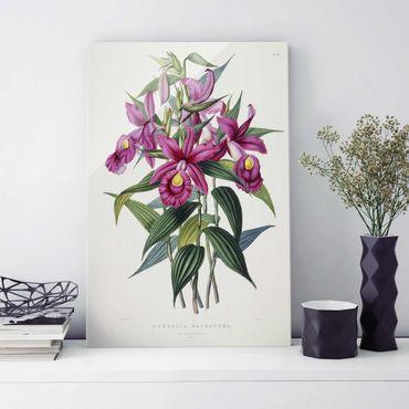 Glasbild - Maxim Gauci - Orchidee I - Hochformat 3:2