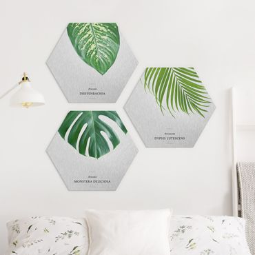 Hexagon Bild Alu-Dibond 3-teilig - Tropische Blätter