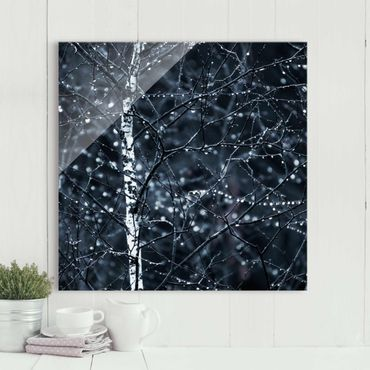 Glasbild - Dunkle Birke im kalten Regen - Quadrat