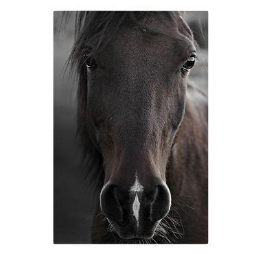 Leinwandbild - Dunkles Pferd - Querformat 2:3