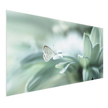 Forex Fine Art Print - Schmetterling und Tautropfen in Pastellgrün - Querformat 1:2