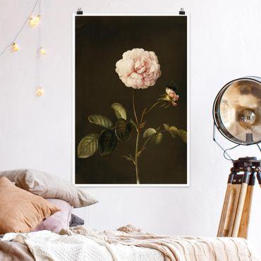 Poster - Barbara Regina Dietzsch - Essig-Rose mit Hummel - Hochformat 3:2