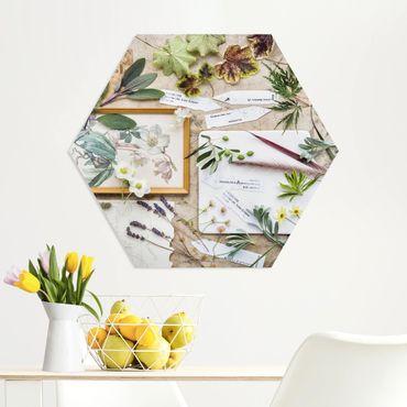 Hexagon Bild Forex - Blumen und Gartenkräuter Vintage