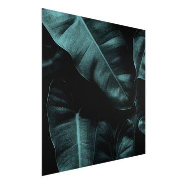 Forex Fine Art Print - Dschungel Blätter Dunkelgrün - Quadrat 1:1