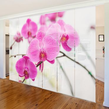 Schiebegardinen Set - Nahaufnahme Orchidee - Flächenvorhänge