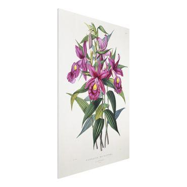 Forex Fine Art Print - Maxim Gauci - Orchidee I - Hochformat 3:2