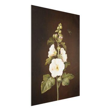 Forex Fine Art Print - Barbara Regina Dietzsch - Stockrose - Hochformat 4:3
