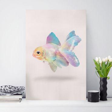 Leinwandbild - Jonas Loose - Fisch in Pastell - Hochformat 3:2