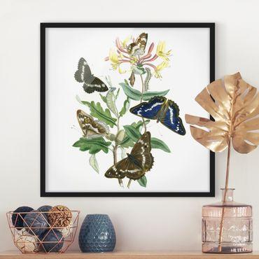 Bild mit Rahmen - Britische Schmetterlinge IV - Quadrat 1:1