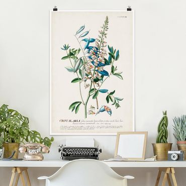 Poster - Vintage Botanik Illustration Hülsenfrüchte - Hochformat 3:2