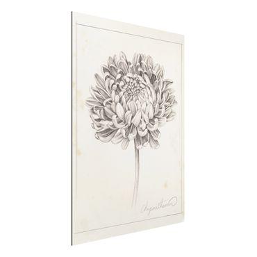 Aluminium Print gebürstet - Botanische Studie Chrysantheme II - Hochformat 4:3