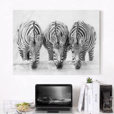 Leinwandbild - Zebra Trio schwarz-weiß - Querformat 3:4