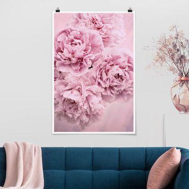 Poster - Rosa Pfingstrosen - Hochformat 3:2