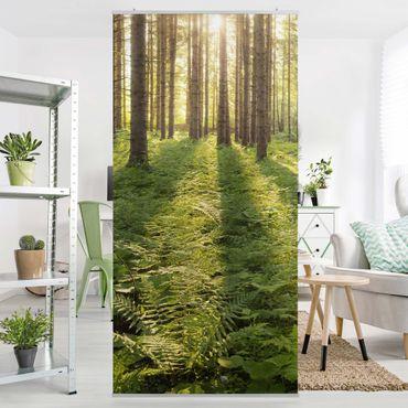 Raumteiler - Sonnenstrahlen in grünem Wald 250x120cm