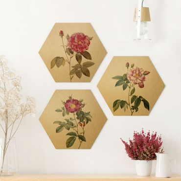 Hexagon Bild Alu-Dibond 3-teilig - Pierre Joseph Redouté - Rosen