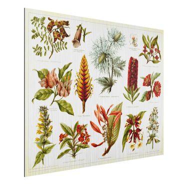 Aluminium Print gebürstet - Vintage Lehrtafel Tropische Botanik I - Querformat 3:4