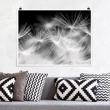 Poster - Bewegte Pusteblumen Nahaufnahme auf schwarzem Hintergrund - Querformat 3:4