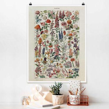 Poster - Vintage Lehrtafel Blumen V - Hochformat 4:3