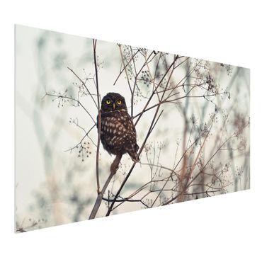 Forex Fine Art Print - Eule im Winter - Querformat 1:2