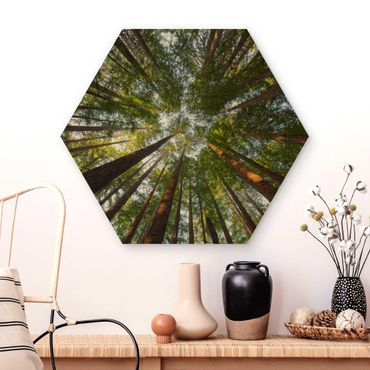 Hexagon Bild Holz - Mammutbaum Baumkronen