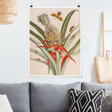 Poster - Anna Maria Sibylla Merian - Ananas mit Insekten - Hochformat 4:3